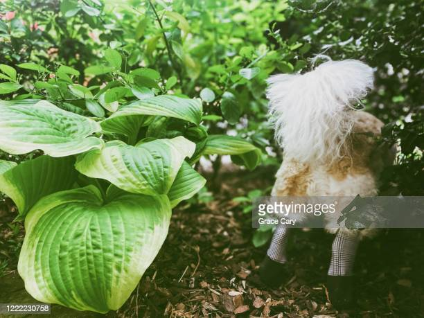 dog with head in bush - hairy bum stock pictures, royalty-free photos & images
