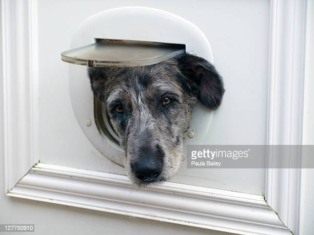 Dog with head through cat flap