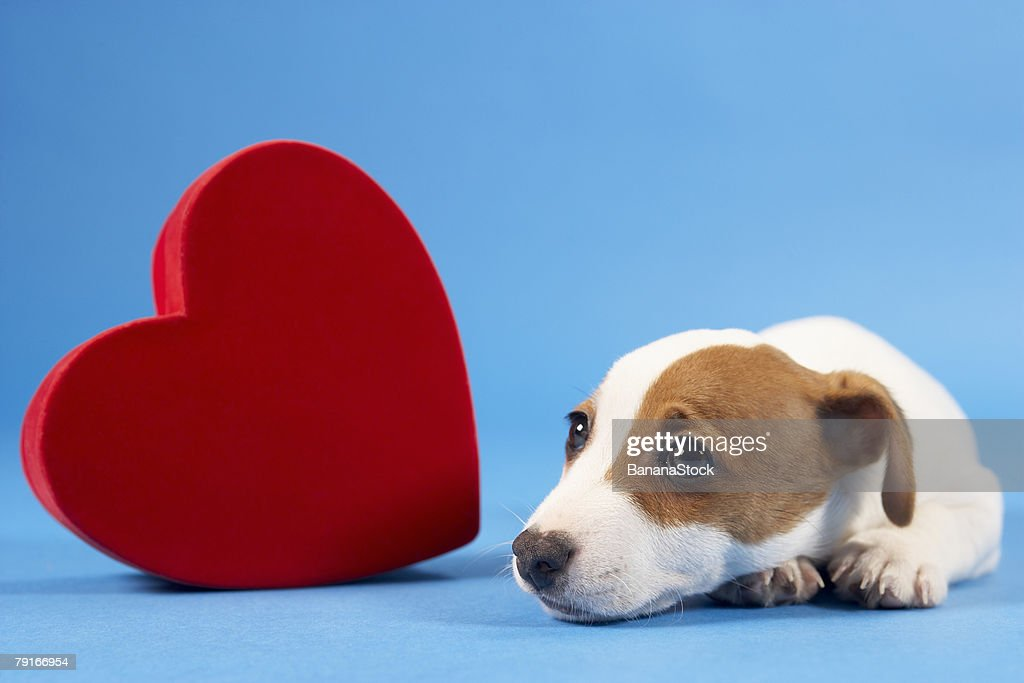 Dog with heart : Stock Photo