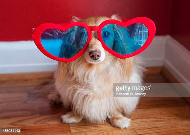 Dog with hearts glasses