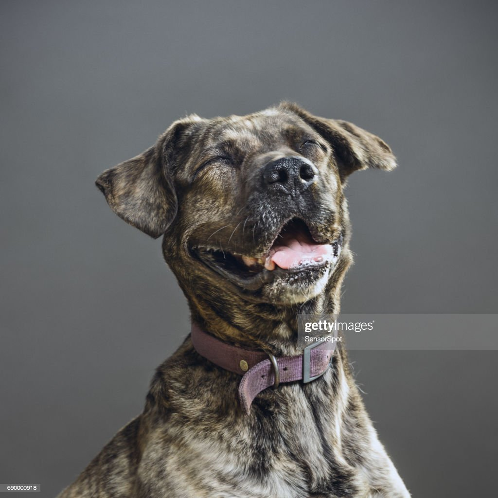 Dog with human expression : Stock Photo