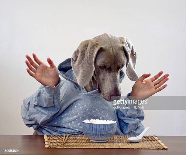 Dog with human hands surprised by a bowl of rice