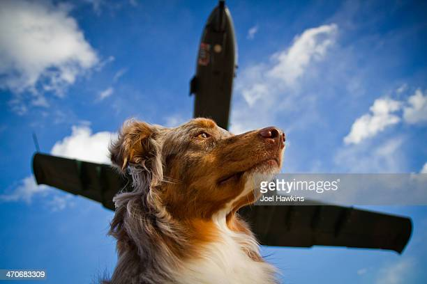 Dog with jet overhead