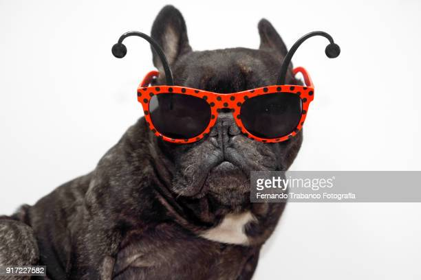 Dog with ladybug glasses