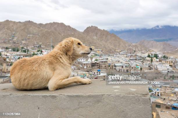 Dog With Landscape View
