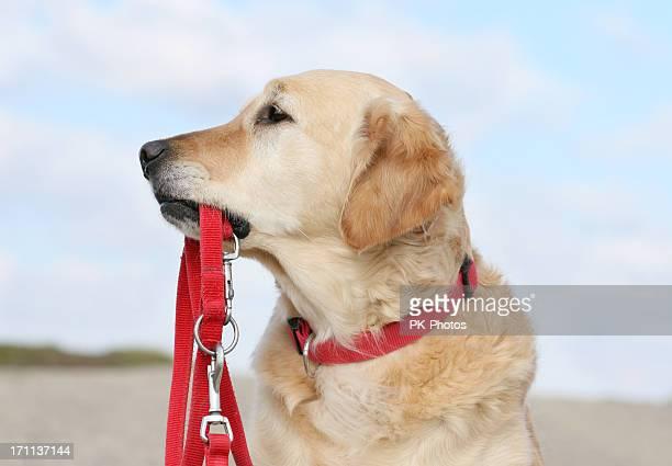 犬をリード