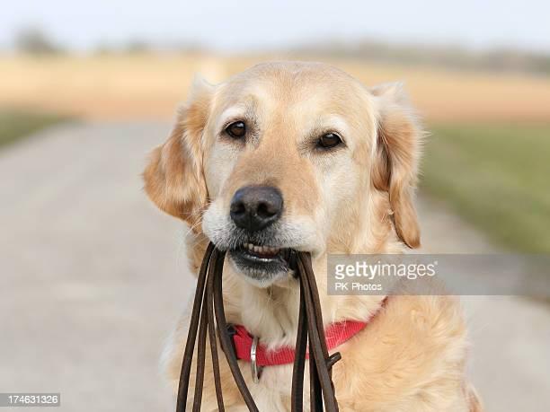 Cachorro com Coleira de Cachorro