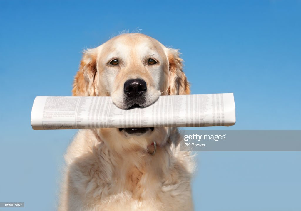 Dog with Newspaper : Stock Photo