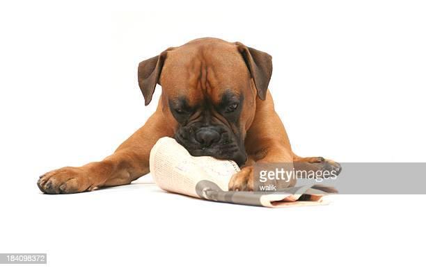 Hund mit Zeitung
