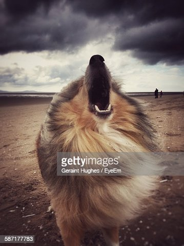 Dog With Open Mouth Standing At Beach