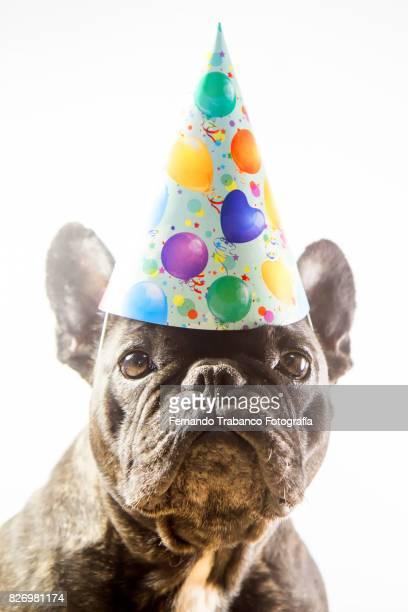 dog with party hat - gorro de fiesta fotografías e imágenes de stock