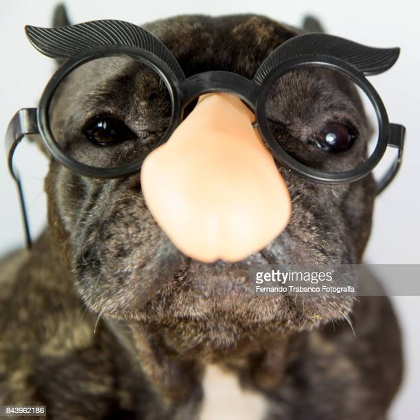 Dog with penis shape glasses