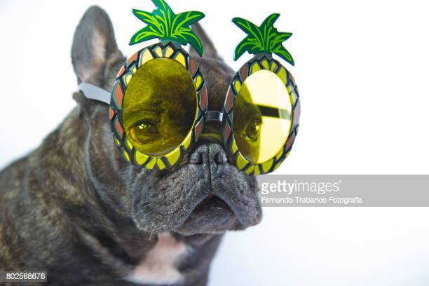 Dog with Pineapple shaped sunglasses