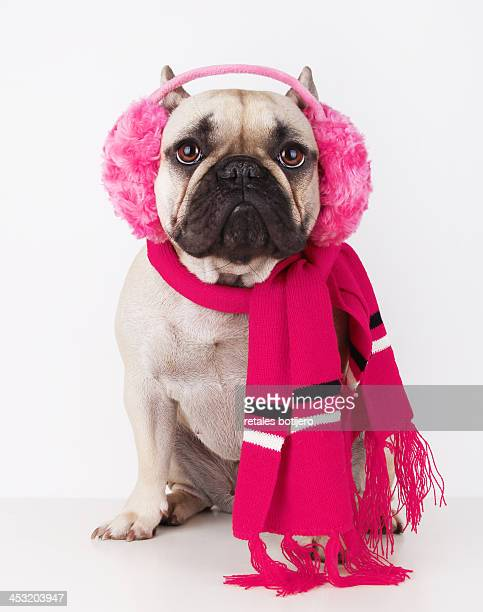 dog with pink earmuffs and scarf