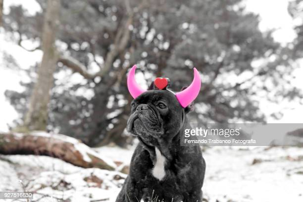 Dog with pink horns in snowy landscape