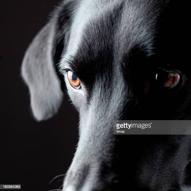 Dog with predatorial look