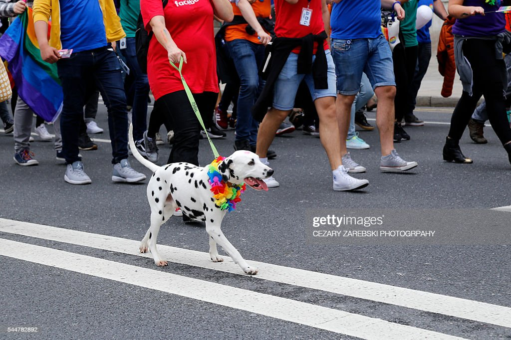 Dog with rainbow collar  at gay pride parade : Stock Photo