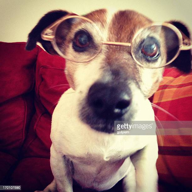 Dog with reading glasses (Blurred motion)