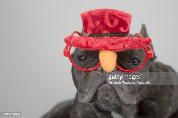 Dog with red glasses and hat