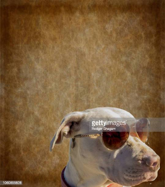 Dog with specs (shades, sunglasses)