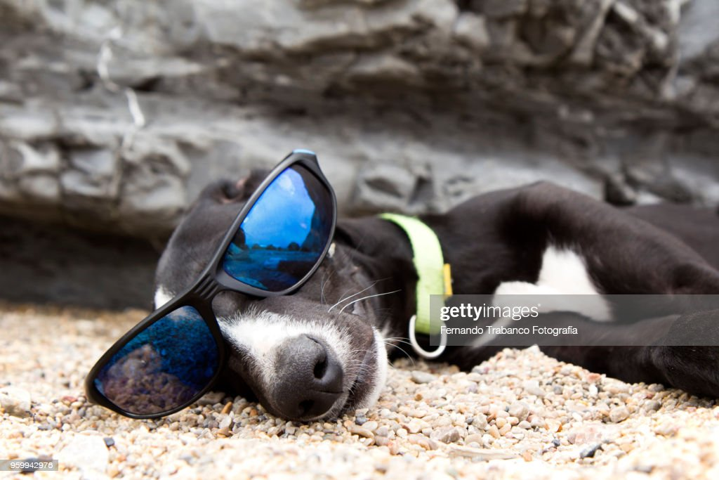 Dog with sunglasses on the beach : Stock Photo