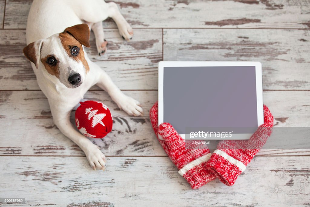 Dog with tablet on christmas background stock photo getty images dog with tablet on christmas background stock photo voltagebd Choice Image