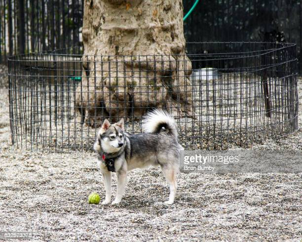 Dog with tennis ball in dog park