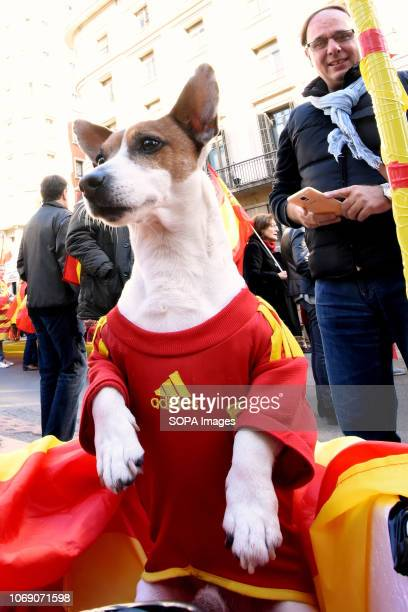 A dog with the shirt of the Spanish Soccer Team seen during the event Two thousand people celebrated the 40th Anniversary of the Spanish Constitution...