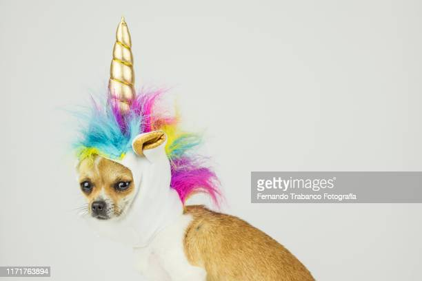 dog with unicorn hat - multi colored hat stock pictures, royalty-free photos & images