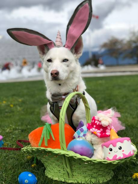 Dog With Unicorn Hat Sitting Near Basket Full Of Gifts At Park