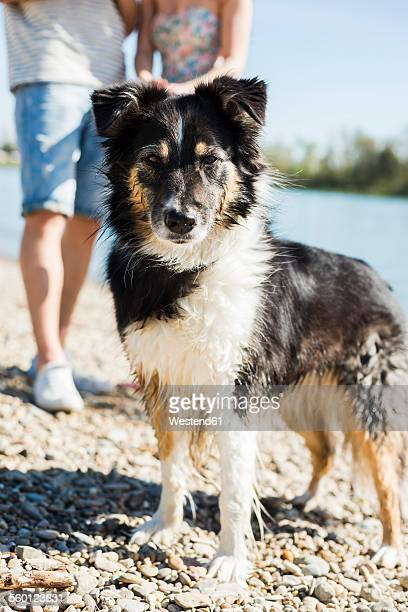Dog with wet fur at the riverside