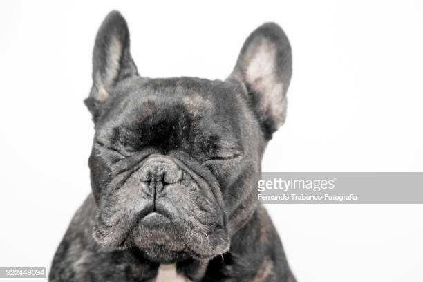 Dog with wrinkles