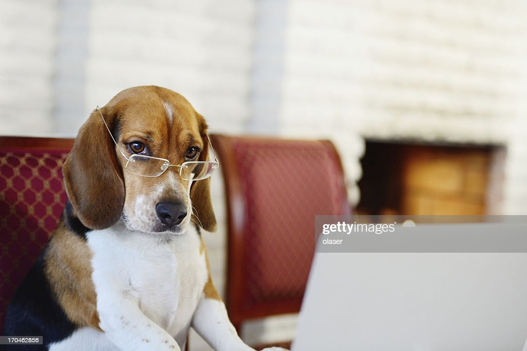 Dog working comfortably from home : Stock Photo
