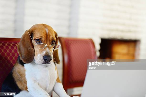 dog working comfortably from home - practical joke stock photos and pictures