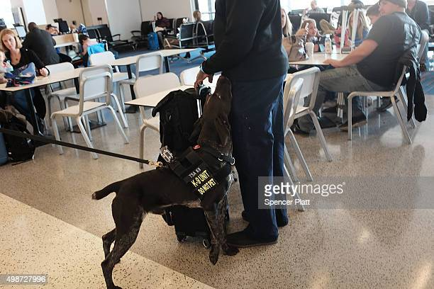 A dog working for a security officer sniffs a passenger at JFK Airport the day before Thanksgiving on November 25 2015 in the Queens borough of New...
