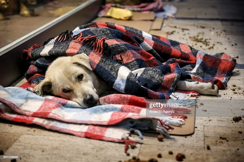 A dog wrapped in blanket lies at the entrance of a shopping center in Bakirkoy district of Istanbul, Turkey on January 8, 2017. Citizens feed animals and lay blankets on the floor to warm them up during inclement weather conditions.