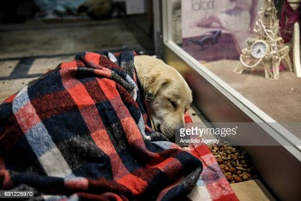 A Dog Wrapped In Blanket Sleeps At The Entrance Of A