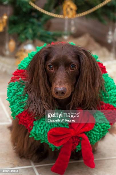 Dog wreath