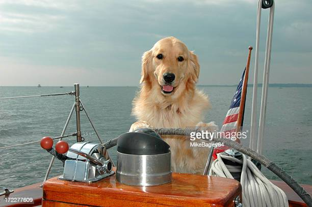 dog yachting - chesapeake bay stock pictures, royalty-free photos & images