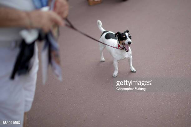 Dog yawns as he is walked the Boulevard de la Croisette during the Cannes Film Festival on May 18, 2017 in Cannes, France. Celebrities, fans and the...