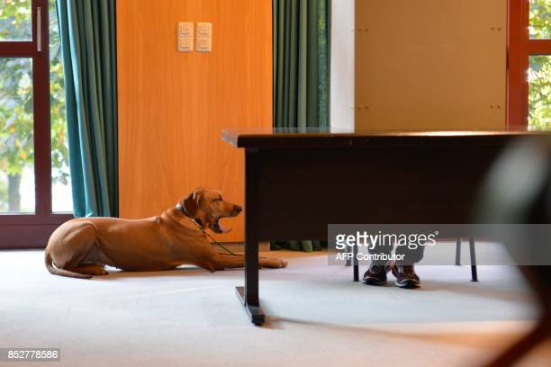 A dog yawns as its master casts his ballot at a polling station in Wuerselen near Aachen western Germany during general elections on September 24...