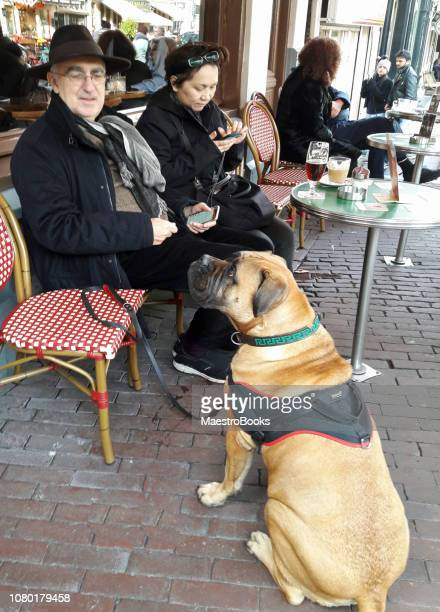 Dog-friendly Cafe in Amsterdam