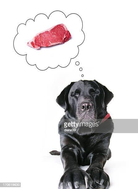 devaneio dos cães