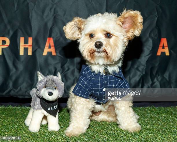 ALPHA Doggie Influencers attend Bring Your Own Dog Screening at Westwood iPic on August 14 2018 in Westwood California