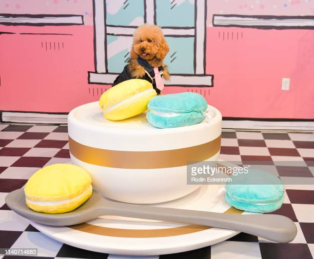 Doggie poses for portrait at WonderWorld Hollywood and Experience PopUp Opening Night Party on April 05 2019 in Hollywood California