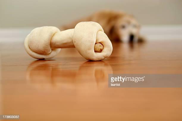 Doggie want a bone.