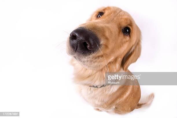 DOG-gone Fishy
