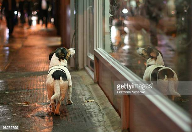 Doggy and window shopping