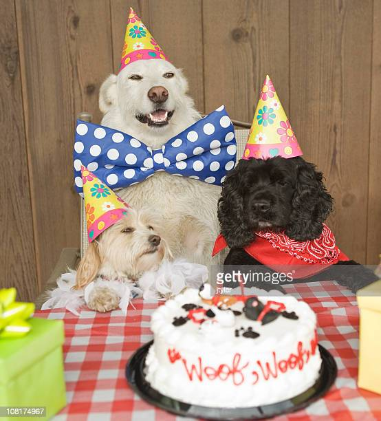 doggy birthday party - funny birthday stock photos and pictures