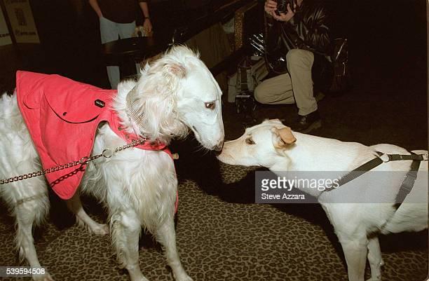 Doggy high society